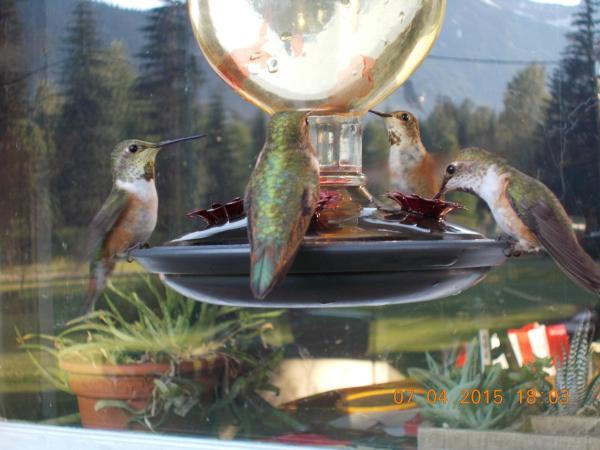 Hotel Pictures: Bone Creek Wilderness Retreat, Blue River