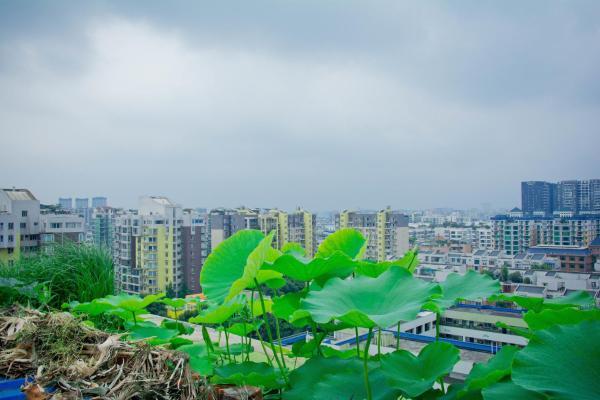 Φωτογραφίες: Housheng Youth Hostel, Τσενγκντού