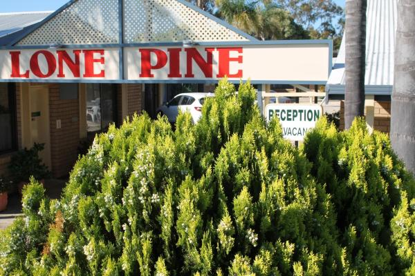 酒店图片: Lone Pine Motel, Corowa