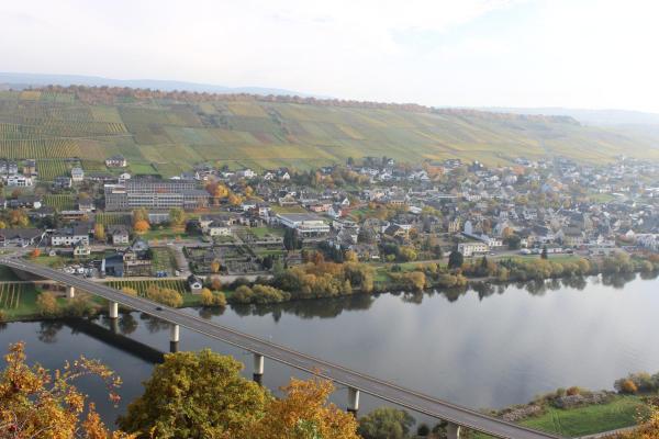 Hotel Pictures: Landgasthof Altes Weingut, Neumagen-Dhron