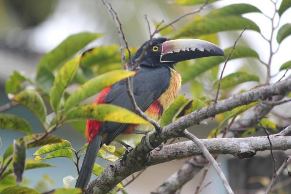 Hotel Pictures: Nature Resort, Bermudian Landing