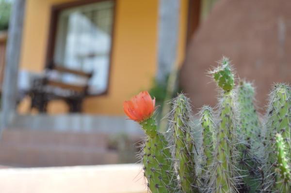 Hotellbilder: Complejo Dulcería El Cazador y cabañas, Tandil