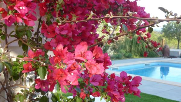 Hotel Pictures: L Olivadou B&B, Trans-en-Provence