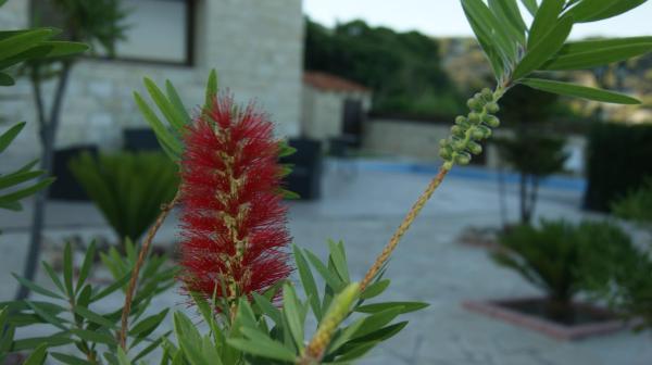 Hotel Pictures: Softades Cottage, Omodos
