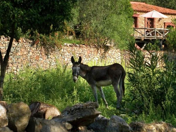 Hotel Pictures: Holiday Home The Dog, Alájar
