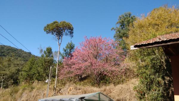 Hotel Pictures: Chácara das Cerejeiras, Santo Antônio do Pinhal