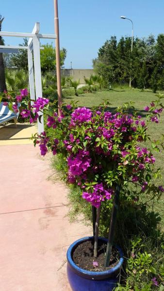 Zdjęcia hotelu: Villa Curti, Kavajë