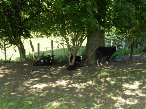 ホテル写真: Xhawirs Horse Farm, Soumagne