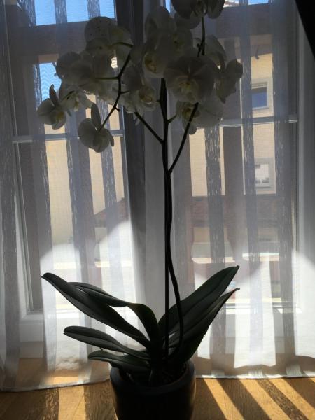Hotel Pictures: Au P'tit Bonheur, Cheseaux
