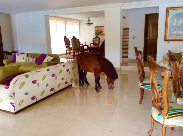 Hotel Pictures: Country house Las Araucarias, Girardota