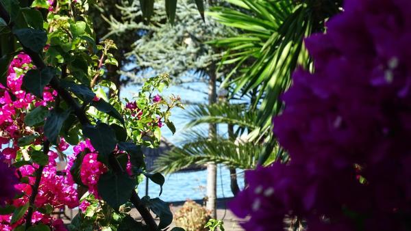 Zdjęcia hotelu: Abalone Resort, Ksamil