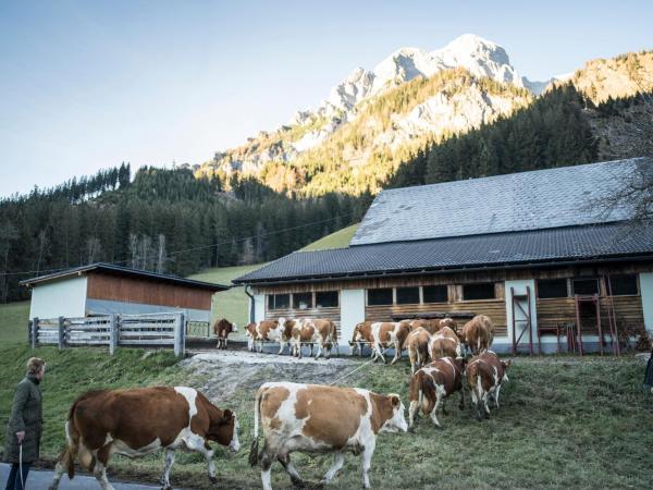 酒店图片: Huberbauer, Johnsbach
