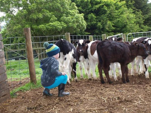 Hotellikuvia: Manderley Park Farmstay B&B, Buln Buln