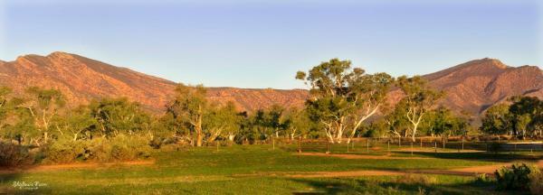 Hotel Pictures: Edeowie Station, Flinders Ranges