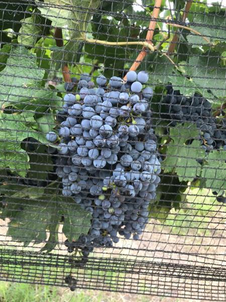 Fotografie hotelů: Chaglasian Wine & Suites, San Rafael