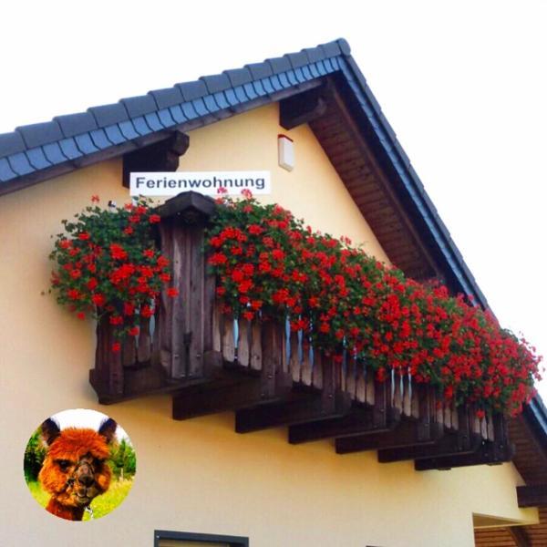Hotel Pictures: Urlaub mit Alpakas, Sabrodt