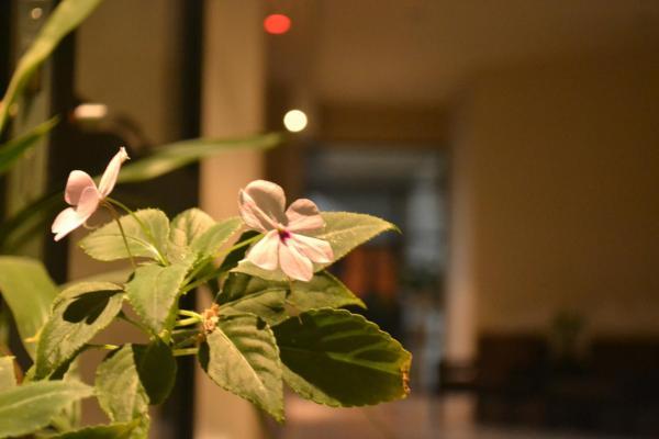 Fotos del hotel: Casa Flores, San Salvador de Jujuy