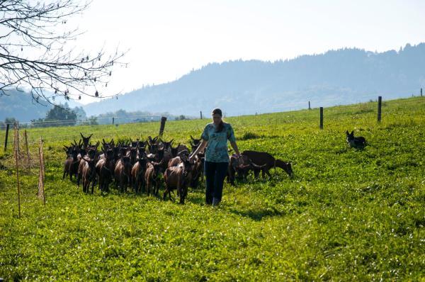 Hotel Pictures: Agroturistika kozí farma Rožnov pod Radhoštěm, Rožnov pod Radhoštěm