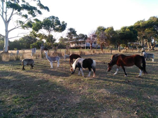 Hotel Pictures: Heartland Hideaway, Vivonne Bay