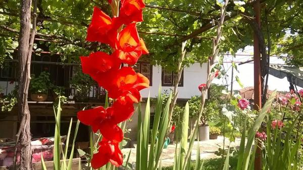 Hotel Pictures: Sisters Trifonovi Guest House, Elena