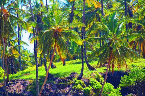 Hotel Pictures: Hostel Boipeba Surf, Ilha de Boipeba