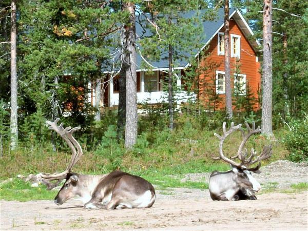 Hotellikuvia: Riekko Chalet, Rovaniemi
