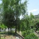 Turismo Grazalema Natural Park, Ubrique