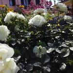 La Rosa di Paestum, Capaccio-Paestum
