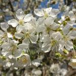 Cseresznyés Apartman,  Balatonalmádi