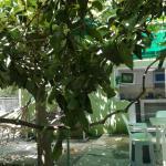 Lana & Barbara Guest House, Makhinjauri