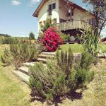 Magical house surrounded by vineyards, Lendava