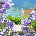Apartmani Peranovic-Zlatne Njive,  Kotor