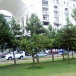Front Line Beach Apartment in Batumi,  Batumi