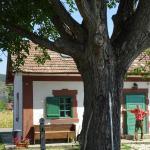 Casa Colectiilor,  Moldoveneşti