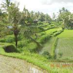 Matahari Lumbung's Bungalow, Ubud