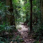 酒店图片: Springbrook Lyrebird Retreat, Springbrook