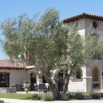 Croad Vineyards - The Inn, Paso Robles