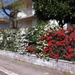 La Magnolia, Cesena