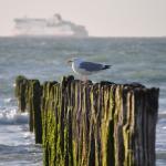 Hotel Pictures: Ancre de Mer, Sangatte