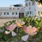 Hotel Pictures: Finca Buenavista, Chilches