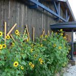 Hotel Pictures: Kalameeste maja, Mustvee