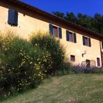 B&B Cal Torello, Urbino