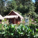 Pai Bamboo Hut, Pai