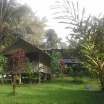 Estación Biológica Tamandua,  Drake