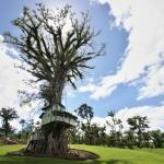 Lupe Sina Treesort,  Tiavi