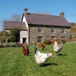 Nantgwynfaen Organic Farm B&B Wales, Llandysul