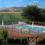 Girasoli, Monteroni d'Arbia