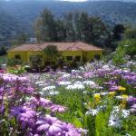 Countryside Studios,  Agia Efimia