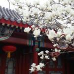 Scholar Tree Courtyard Hotel - Beijing Hebei Guest Hotel, Beijing