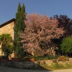 Podere Santa Cristina, Monti di Sotto